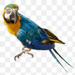Parrot Background - Parrot Bird Nest Columbidae Clip Art PNG