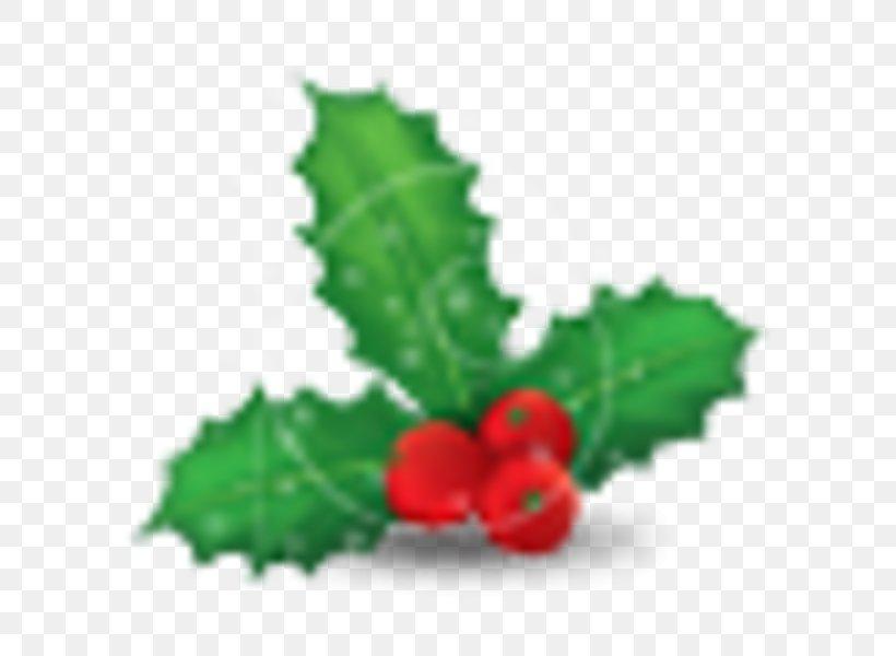 Mistletoe Christmas Common Holly Phoradendron Tomentosum, PNG, 600x600px, Mistletoe, Aquifoliaceae, Aquifoliales, Berry, Christmas Download Free