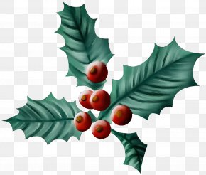 Plane Tree - Holly PNG