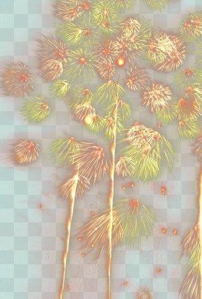 Fireworks - Petal Floral Design Leaf Pattern PNG