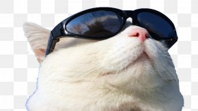 Cat Wearing Sunglasses T - Sunscreen GitHub PNG
