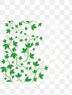 Green Leaves - Common Ivy Leaf Vine PNG