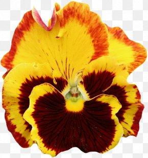 Flower - Pansy Flower Garden Flower Garden Clip Art PNG