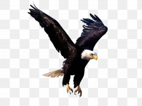 Eagle Image, Free Download - Eagle Clip Art PNG