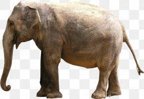 Grey Elephant - Elephantidae Indian Elephant Clip Art PNG