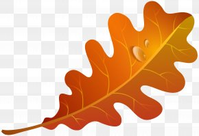 Fall Orange Leaf Clipart Image - Autumn Leaf Color Orange Clip Art PNG