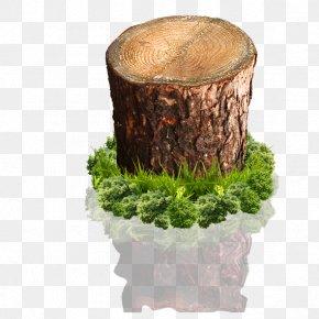 Tree Stump - Wood Tree Stump PNG