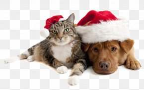 Christmas Cats And Dogs PNG