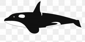 Dolphin - Dolphin Killer Whale Cetacea Baleen Whale Clip Art PNG