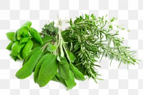 Herbs Pic - Herb Vegetable Clip Art PNG