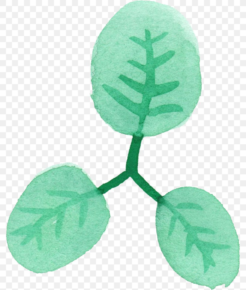 Leaf Watercolor Painting Green, PNG, 781x965px, Leaf, Color, Com, Green, Plant Download Free