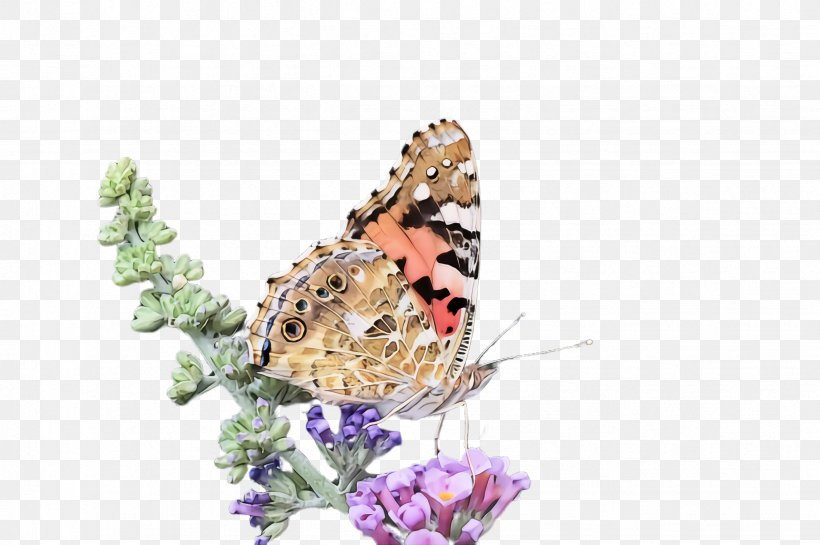 Monarch Butterfly, PNG, 2452x1632px, Cynthia Subgenus, American Painted Lady, Brushfooted Butterfly, Butterfly, Insect Download Free