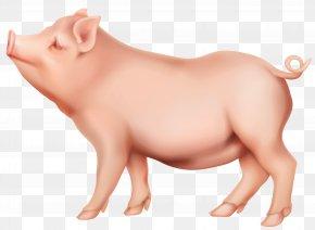 PIg Clip Art Image - Domestic Pig Clip Art PNG