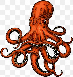 Giant Pacific Octopus Tentacle - Octopus Cartoon PNG