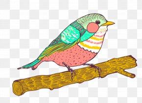 Vector Sparrow Animal - Bird Parrot Euclidean Vector Illustration PNG
