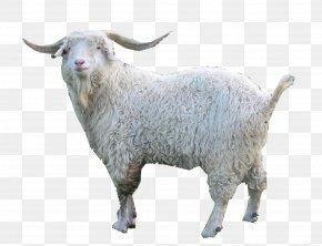 Goat - Oberhasli Goat Nigerian Dwarf Goat Fainting Goat Damascus Goat Angora Goat PNG