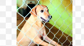 Maltrato - Labrador Retriever Dog Breed Kennel Animal Shelter Snout PNG