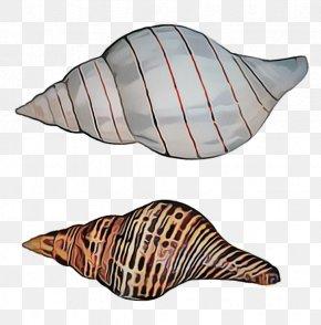 Shell Sea Snail - Conch Conch Shankha Sea Snail Shell PNG