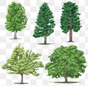 Tree Image - Tree Clip Art PNG