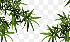 Bamboo - Qingming Bamboo PNG