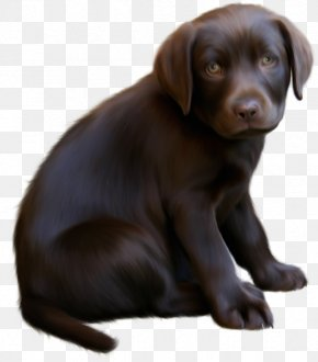 Cute Little Brown Dog With Blue Eyes Clipart - Boykin Spaniel Puppy Kitten Clip Art PNG