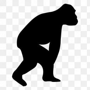 Gorilla - Gorilla Neandertal Human Evolution Chimpanzee Homo Sapiens PNG