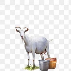 Goat - Goat Milk Cattle Sheep PNG