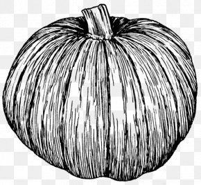 Pumpkin - Pumpkin Pie Zucchini Drawing Clip Art PNG