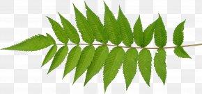 Leaf - Leaf Plant Stem Desktop Wallpaper PNG