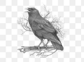 Crow - American Crow Common Raven Black And White Feather Drawing PNG