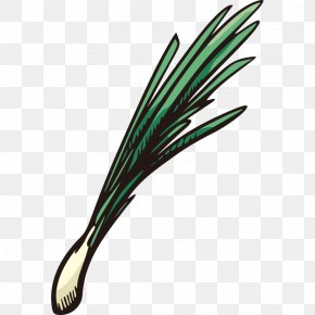 Hand Painted,Stick Figure,Fruits And Vegetables,vegetables,Fruits And Vegetables,Cartoon - Vegetable Scallion Onion Fruit PNG