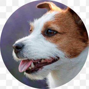 Dog - Dog Food Puppy Dog Breed Pet Food PNG
