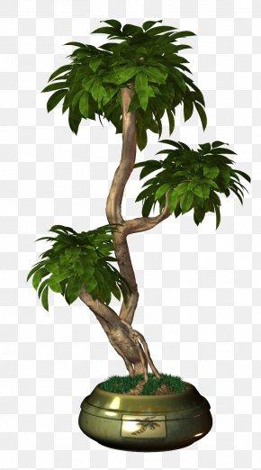 Tree - Tree Plant Arecaceae Flower PNG