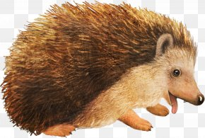Small Hedgehog Animal Material - Hedgehog Cartoon PNG