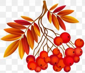 Autumn Leaf Deco Plant Image - Autumn Southern Hemisphere Northern Hemisphere Season September Equinox PNG
