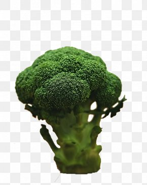 Product Kind Broccoli - Broccoli Vegetable Food Diet Stock Photography PNG
