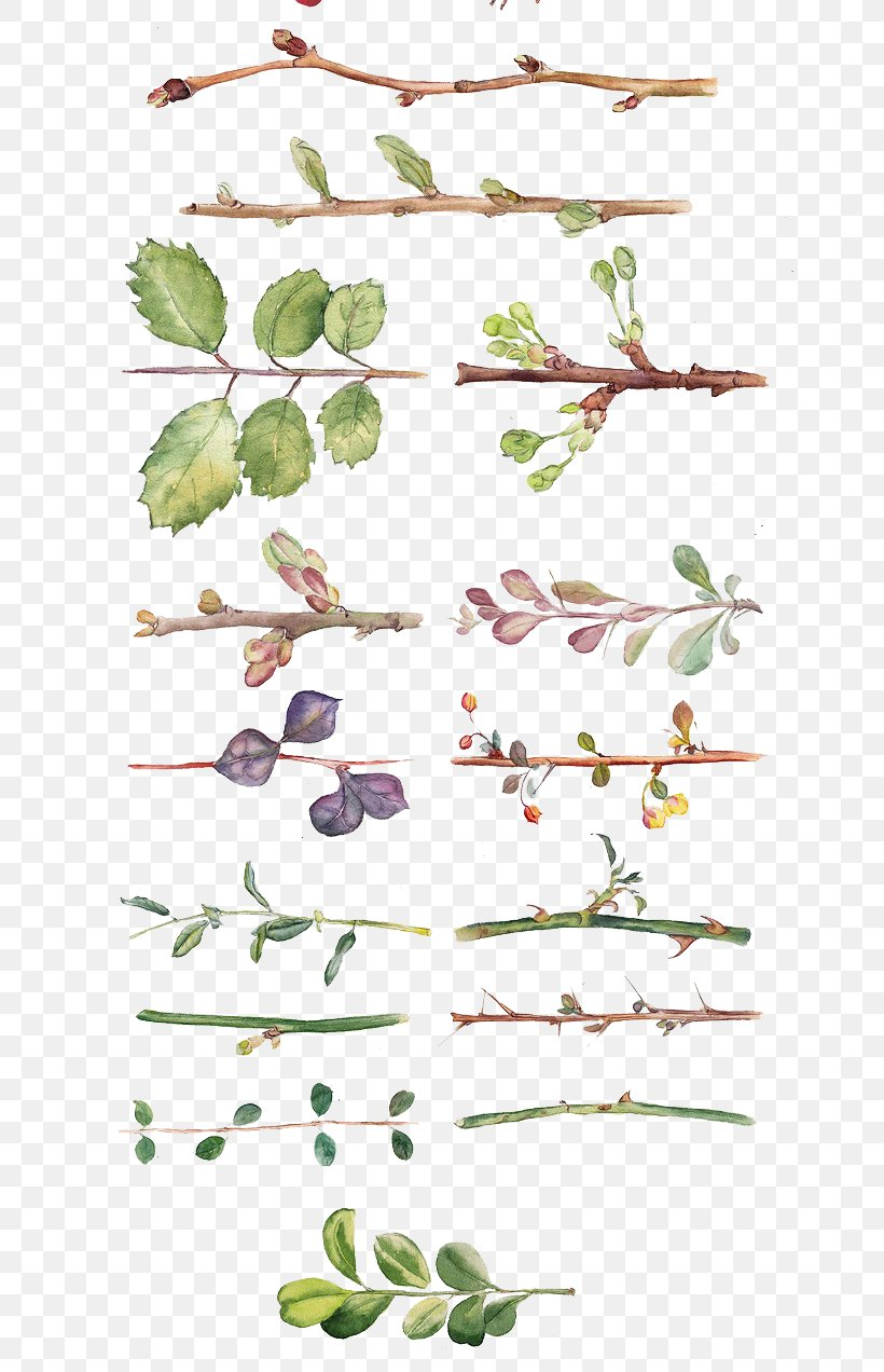 Flower Watercolor Painting Drawing Floral Design, PNG, 658x1272px, Flower, Art, Branch, Calligraphy, Drawing Download Free