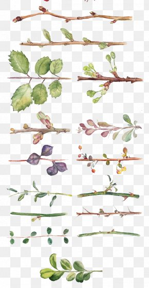 All Kinds Of Hand-painted Watercolor Leaves And Branches - Flower Watercolor Painting Drawing Floral Design PNG