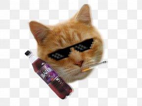 Cat - Cat Kitten Pathos Hazard Whiskers PNG