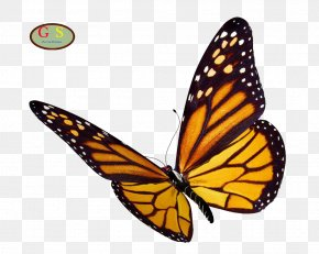 Monarch Butterfly - Monarch Butterfly Clip Art PNG