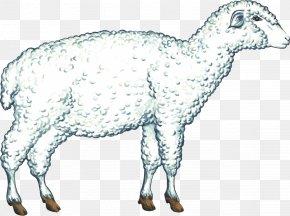 Sheep - Sheep Cattle Alpine Goat Boer Goat Saanen Goat PNG