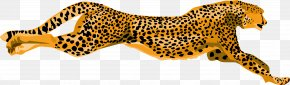 Cheetah Pic - Cheetah Leopard Tiger Clip Art PNG