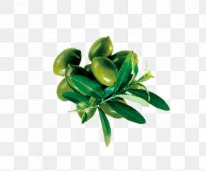 Olives - Olive Oil Flyer Advertising Poster Bottle PNG