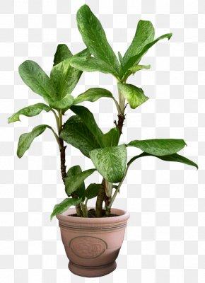 Plant - Flowerpot Houseplant Vine Devil's Ivy PNG