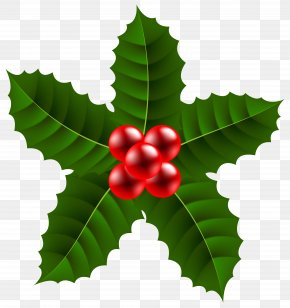 Large Christmas Holly Clip Art Image - Holly Aquifoliales Fruit Leaf PNG