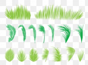 Palm Leaves And Grass - Leaf Arecaceae Palm Branch Tree PNG