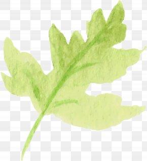 Water Color Leaf - Leaf Vegetable Plant Stem Tree PNG