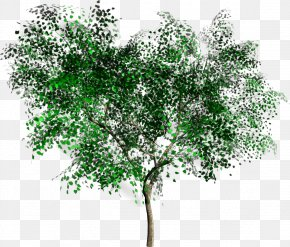 Trees - Tree Rendering Clip Art PNG