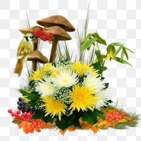 Mushrooms And Chrysanthemums - Chrysanthemum Transvaal Daisy Flower Digital Image PNG