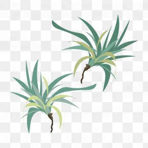 Leaf - Leaf Grasses Plant Stem Evergreen INAV DBX MSCI AC WORLD SF PNG